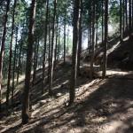 7.편백나무숲